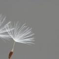 img_1594-0e9e14b349bd15e237ceae5d8e83d592178b6649