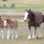 imgp8960-mare-foals-97a9d77a068720030aa077d4b351e562ff372072