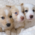 jordan-soccer-july-puppy-dogs-096-78d7ab0f62e58d8197e45b9024ec68ea4b380167