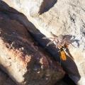 wasp-catching-dinner-00a916ac708f0bee4ab9b5b9bc53ea6f89df0b8f
