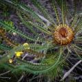 wild-flower-eb88fc271c85a394fd5d1db9dab3a9ff0c19e92d